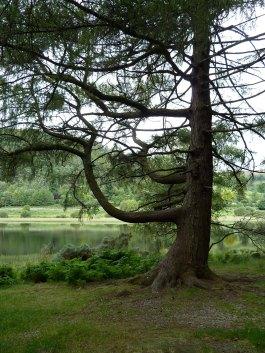 Irlan, Wicklow Mmountains, Glendalough 3